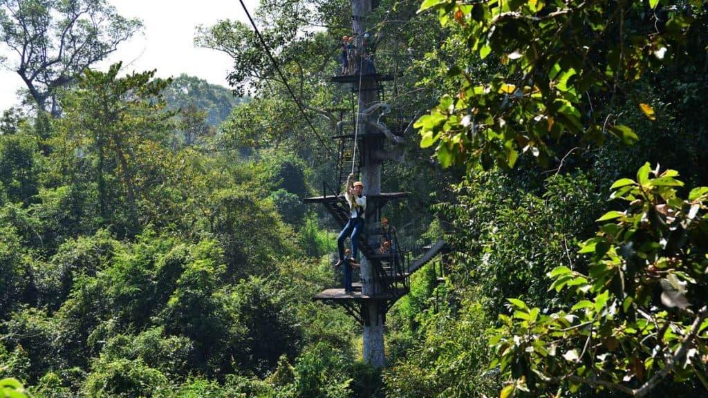 Ziplining mellan trädkronorna i Angkor Wat.