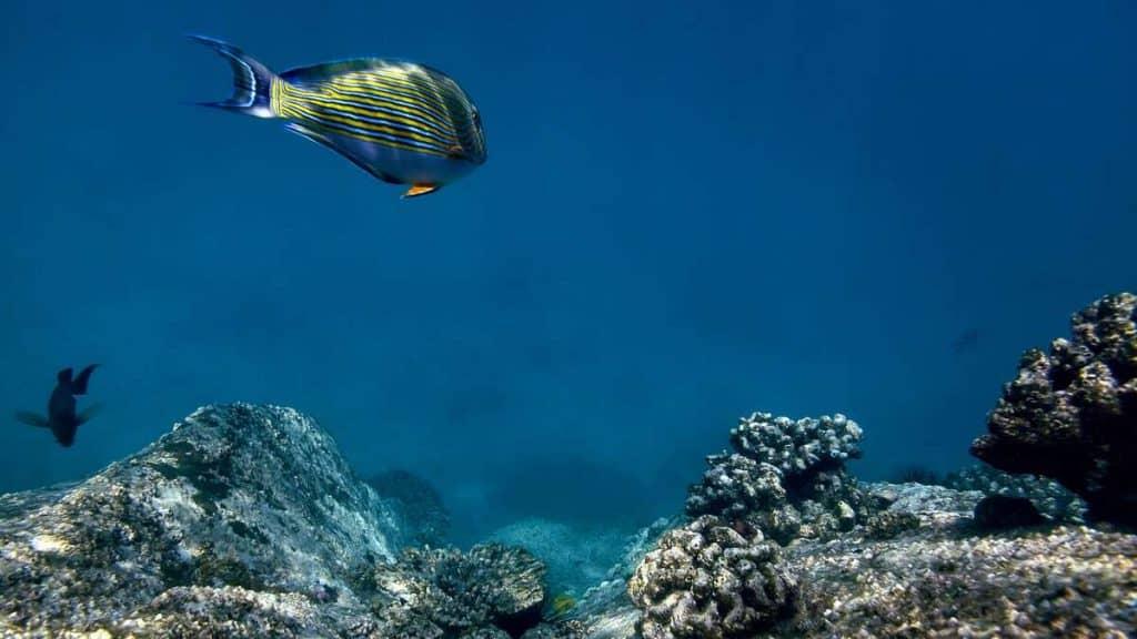 Upplev de vackra korallreven utanför ön.