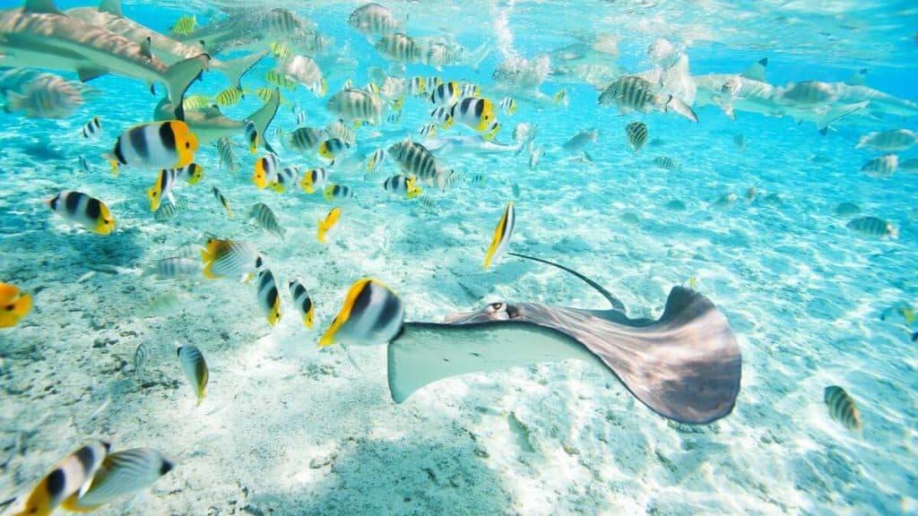 Utforska livet under havsytan på Bora Bora.