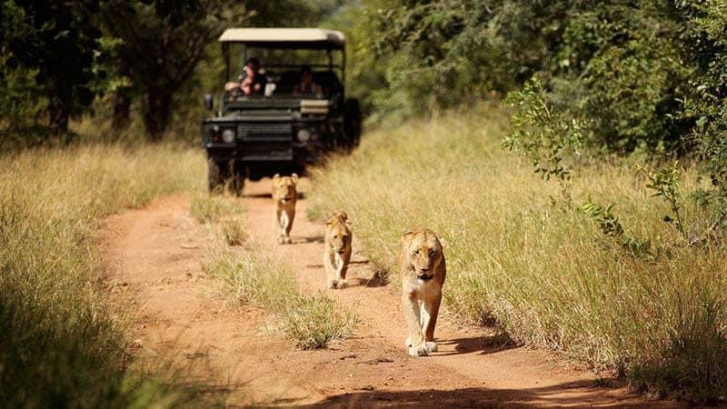 Jabulani Safari Lodge